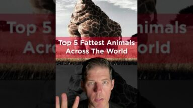 TOP 5 FATTEST ANIMALS ACROSS THE WORLD - SHOCKING FACTS